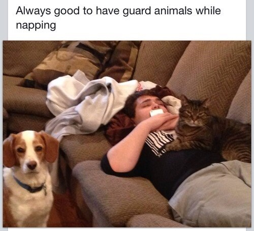 The Guardians of the Nap Attack