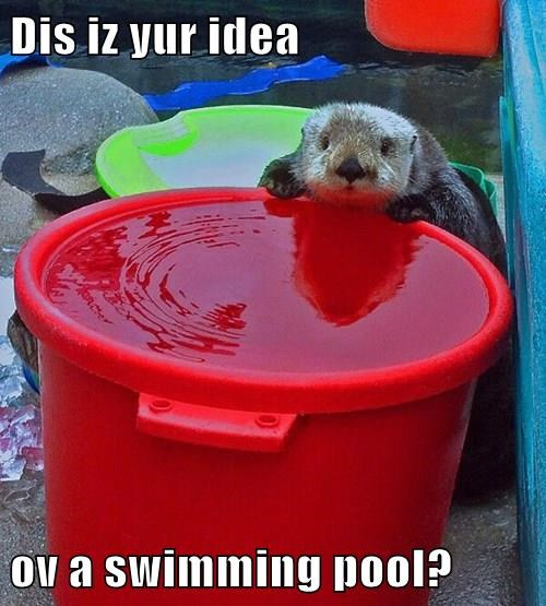 Dis iz yur idea  ov a swimming pool?
