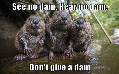 See no dam. Hear no dam.  Don't give a dam
