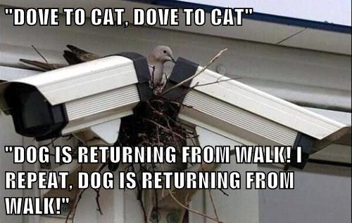 camera,Cats,bird,dogs,pigeon