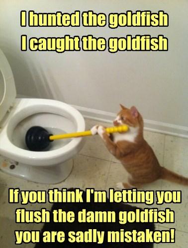 I hunted the goldfish