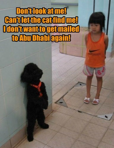 Don't look at me! Can't let the cat find me! I don't want to get mailed to Abu Dhabi again!