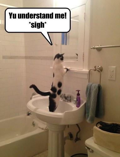 Cats,mirror,spots,selfie