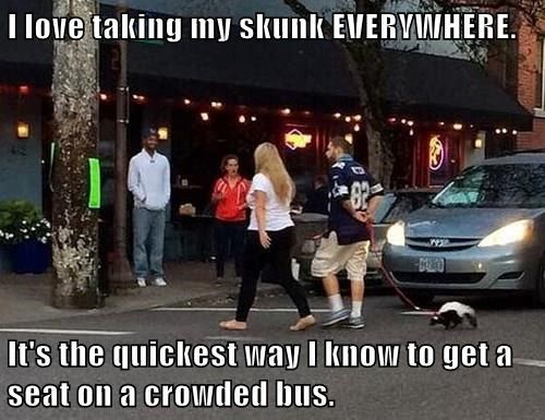 I love taking my skunk EVERYWHERE.  It's the quickest way I know to get a seat on a crowded bus.