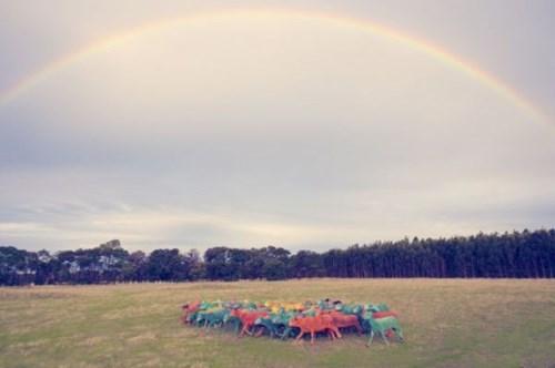 pretty colors,sheep,rainbow