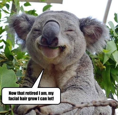 koala,star wars,yoda