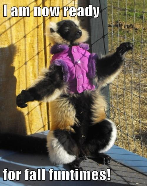behold,fall,primate,vest