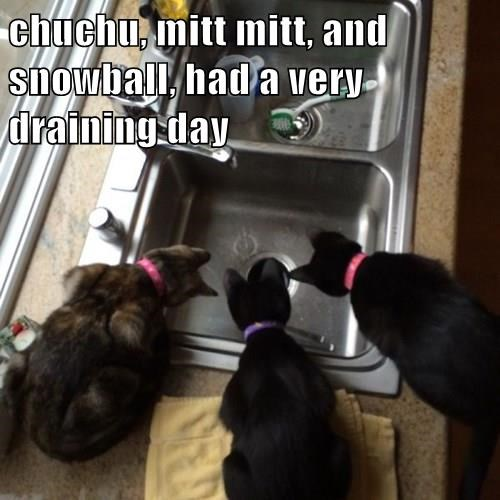 chuchu, mitt mitt, and snowball, had a very draining day