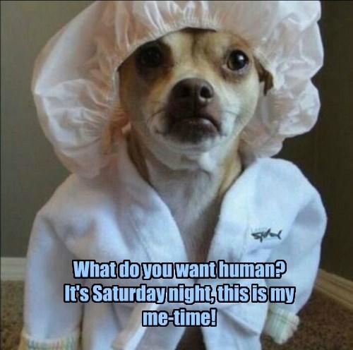 chihuahua,dogs,spa,saturday