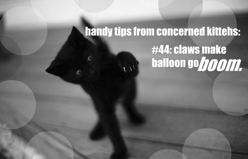 handy tips from concerned kittehs: