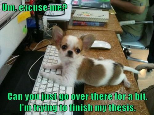 bacon,chihuahua,dogs,literature,puppy,thesis