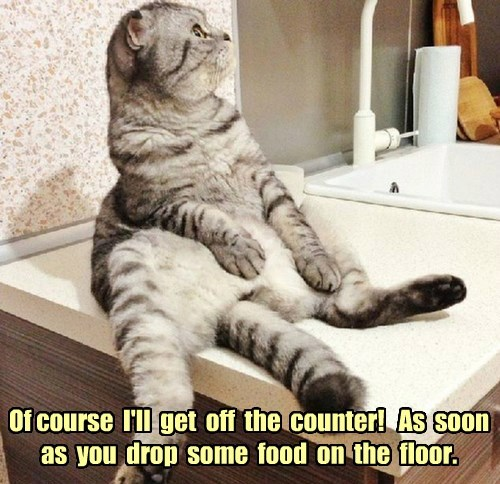 Of course  I'll  get  off  the  counter!   As  soon  as  you  drop  some  food  on  the  floor.