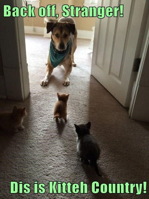 Back off, Stranger!  Dis is Kitteh Country!