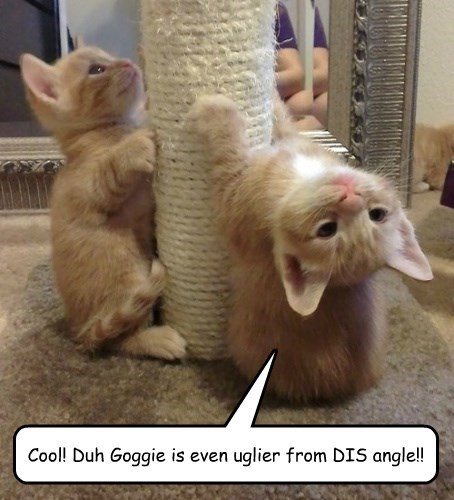 Cool! Duh Goggie is even uglier from DIS angle!!