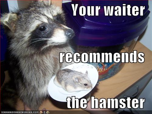 Your waiter recommends the hamster