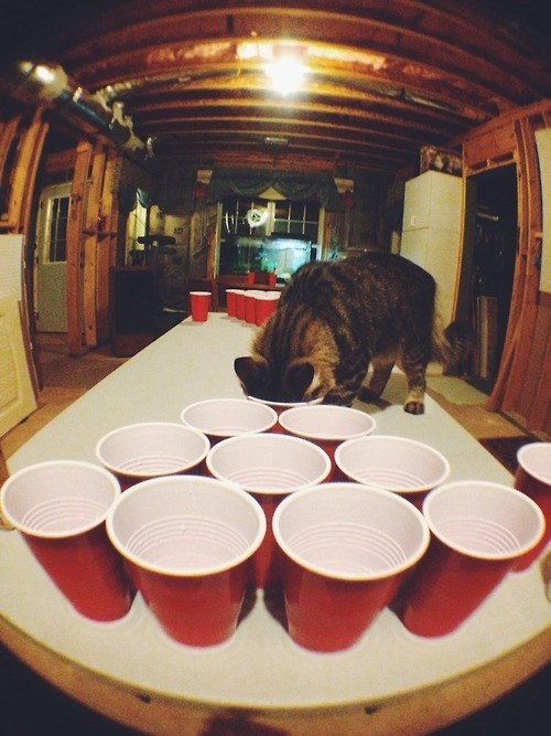 Cats,beer pong,cheating,funny