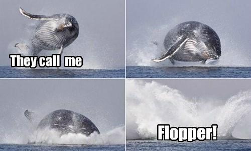 Flipper's cousin