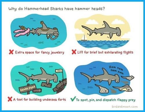 Why Do Hammerhead Sharks Look Like They Do?