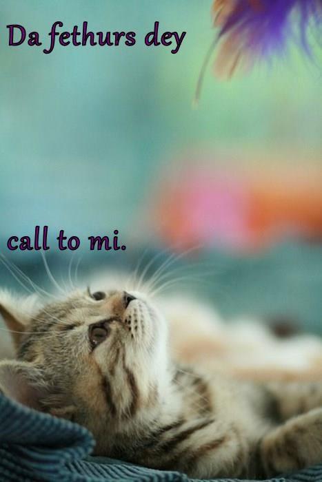 Da fethurs dey call to mi.