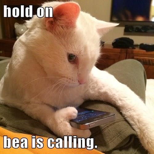 hold on  bea is calling.