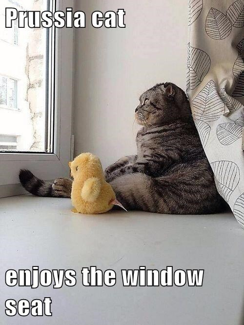 Prussia cat  enjoys the window seat
