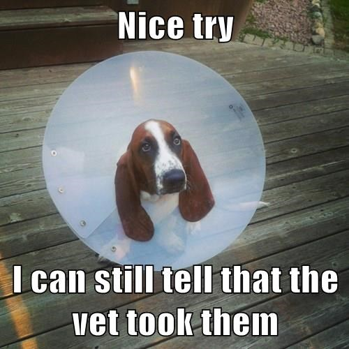 Nice try  I can still tell that the vet took them