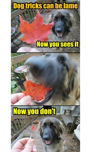 dogs,fall,leaves,magic,trick
