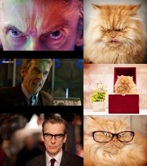 12th Doctor Is The Angriest of Cats