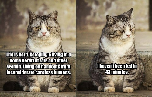 It's Hard out there for a Lolcat