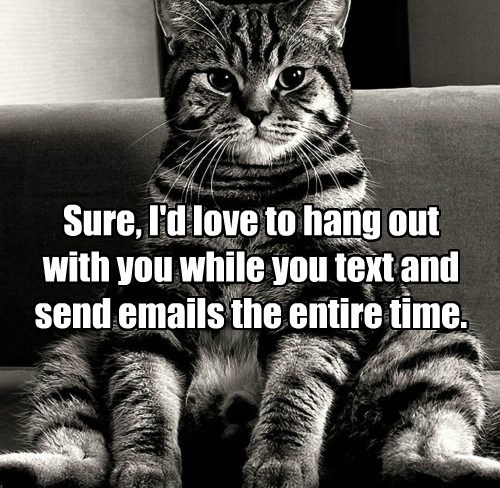 Cats,sarcasm,phone,the internets