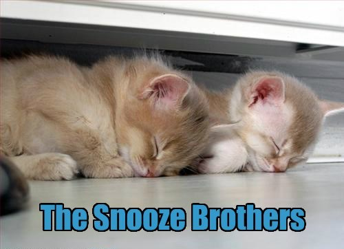 Cats,blues brothers,nap