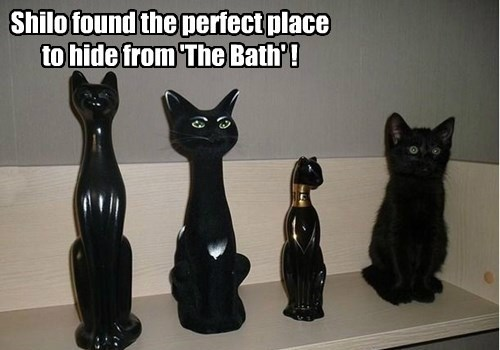 Cats,bath,black cat,hiding