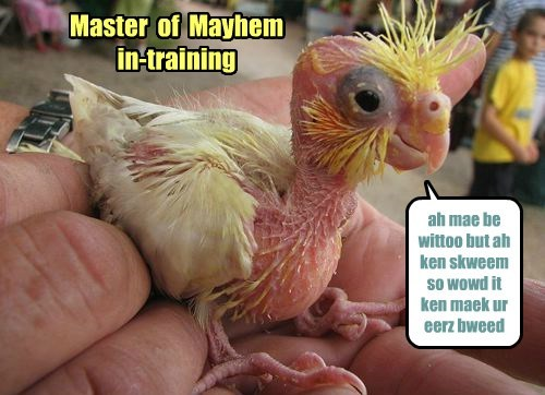 Master  of  Mayhem  in-training