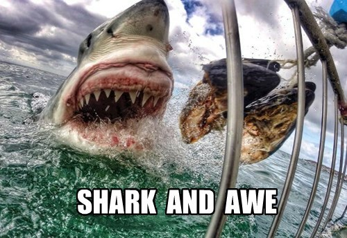 SHARK  AND  AWE