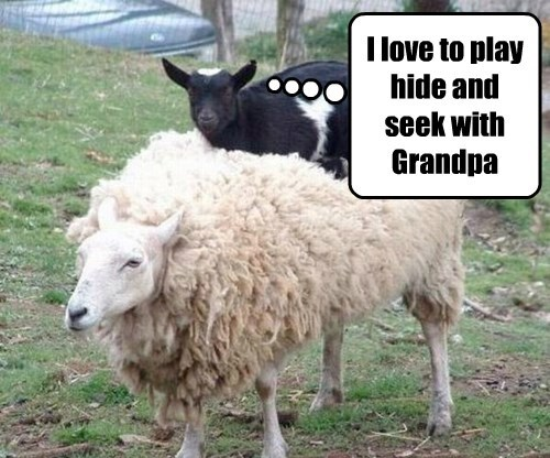 hide and seek,Grandpa,sheep