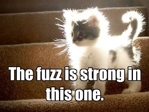 May the fuzz be with you, always.