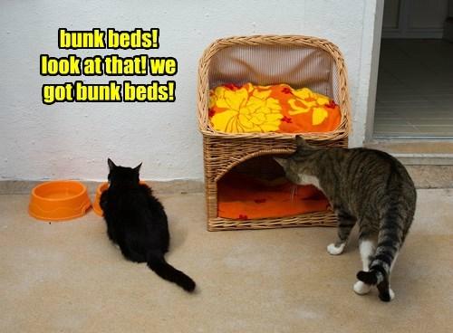 bunk beds!  look at that! we got bunk beds!