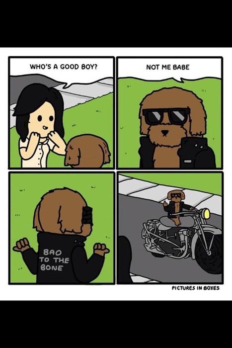BAMF,bad dog,dogs,leather jacket,web comics