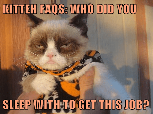 KITTEH FAQS: WHO DID YOU   SLEEP WITH TO GET THIS JOB?