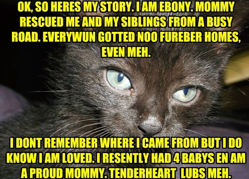 OK, SO HERES MY STORY. I AM EBONY. MOMMY RESCUED ME AND MY SIBLINGS FROM A BUSY ROAD. EVERYWUN GOTTED NOO FUREBER HOMES, EVEN MEH.       I DONT REMEMBER WHERE I CAME FROM BUT I DO KNOW I AM LOVED. I RESENTLY HAD 4 BABYS EN AM A PROUD MOMMY. TENDERHEART  L