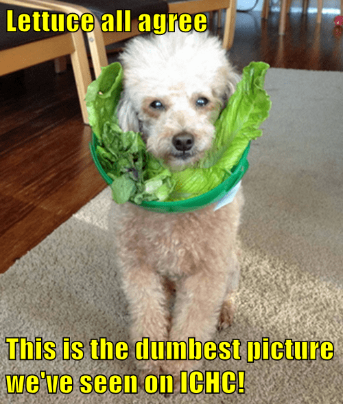 Lettuce all agree  This is the dumbest picture we've seen on ICHC!