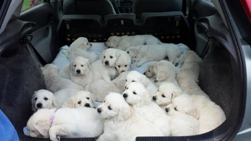Just got new car-pets...