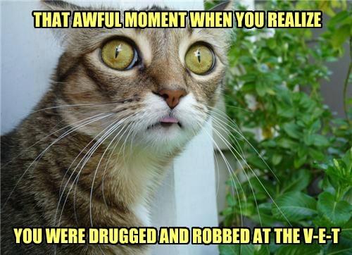 robbed,veterinarian,Cats