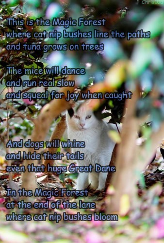 This is the Magic Forest  where cat nip bushes line the paths and tuna grows on trees  The mice will dance  and run real slow and squeal for joy when caught    And dogs will whine  and hide their tails even that huge Great Dane  In the Magic Forest at the