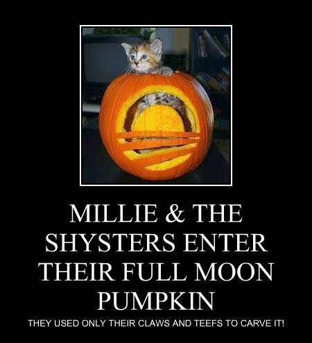 MILLIE & THE SHYSTERS ENTER THEIR FULL MOON PUMPKIN