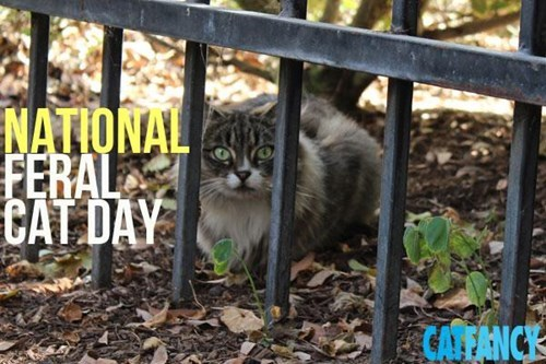 Today, October 16, is Feral Cat Day!