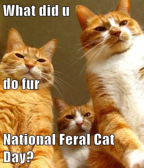 What did u do fur National Feral Cat Day?