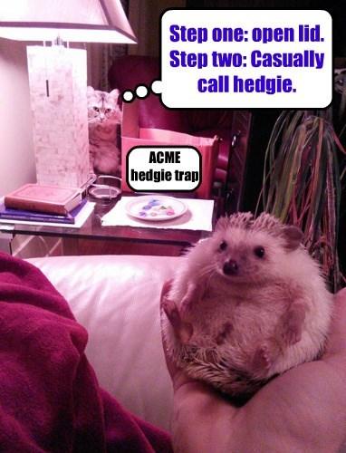 Heeeere hedgie hedgie hedgie!