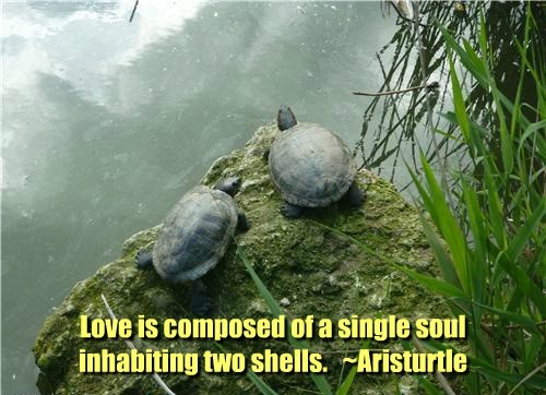 puns,philosophy,Aristotle,turtle