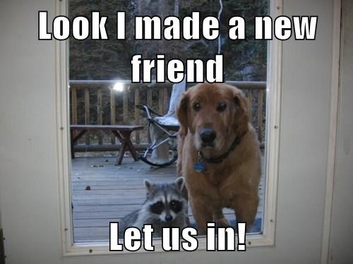 Look I made a new friend  Let us in!